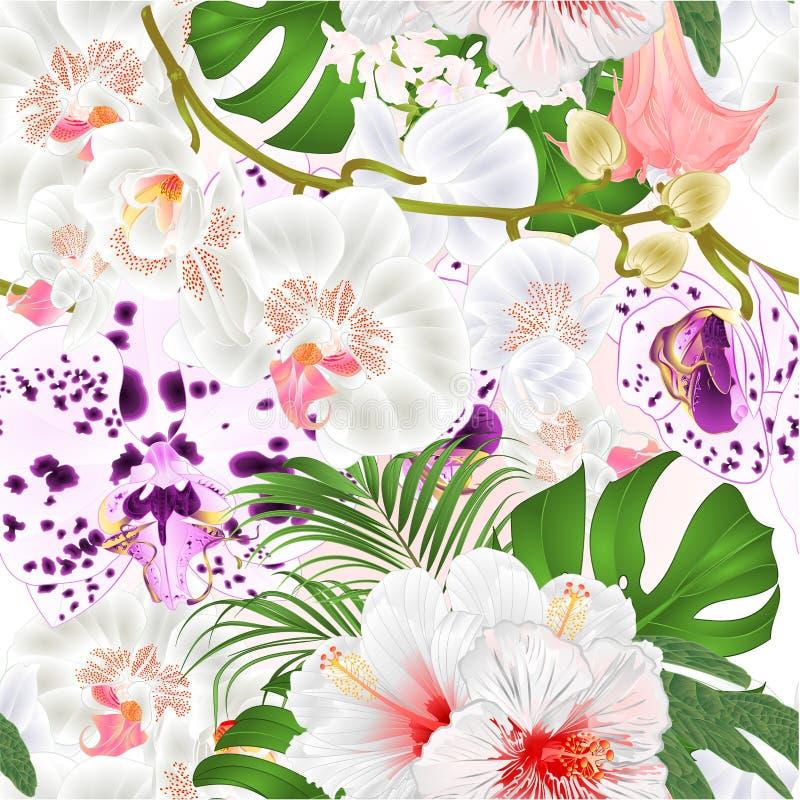 De naadloze orchideeën van de textuurtak bloeit tropische de installatiestam van Phalaenopsis en knoppen en witte hibiscus uitste royalty-vrije illustratie