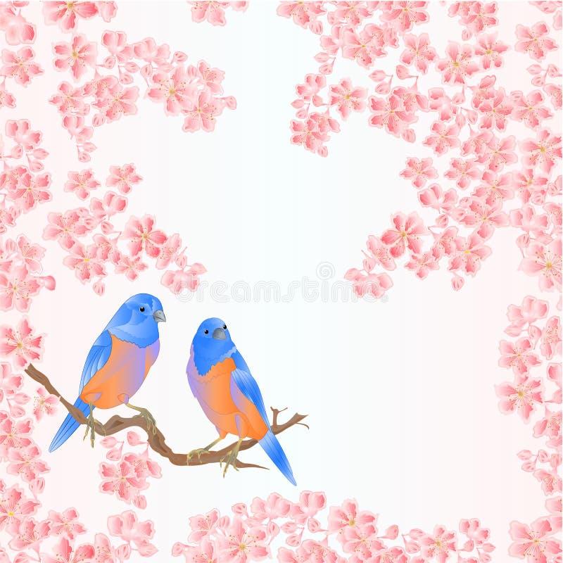 De naadloze sialia van de textuurvogel en van de sakuralente uitstekende vector editable illustratie als achtergrond vector illustratie