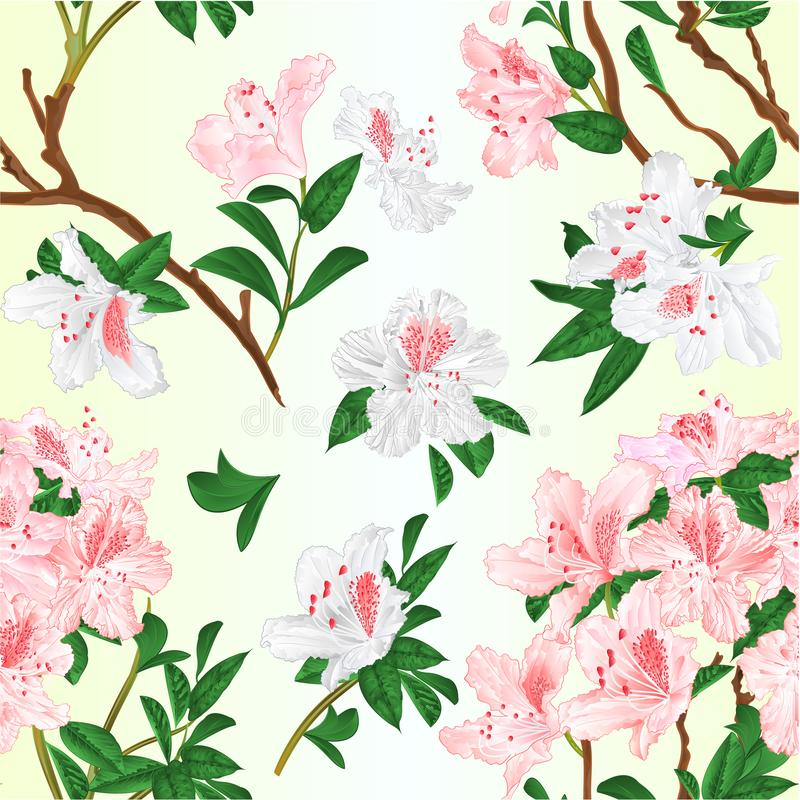 De naadloze textuur lichtrose en witte rododendrons vertakt zich de uitstekende vector editable illustratie van de bergstruik royalty-vrije illustratie