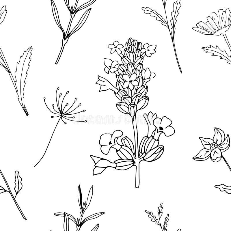 De naadloze van het de bloemgras van de patroon bloemen zwart-wit lavendel vectorillustratie vector illustratie