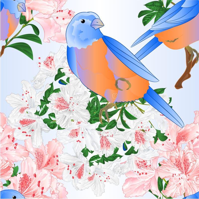De naadloze van de de Sialialijster van textuur Kleine vogels lichtrose en witte rododendron vertakt zich uitstekende vector edit vector illustratie