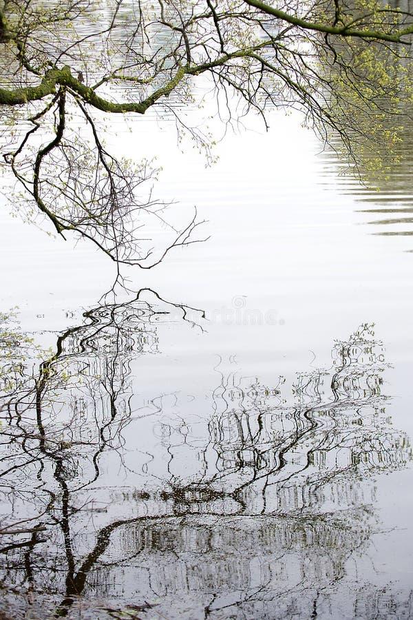 De naakte takken van de boom worden weerspiegeld in de rivier stock fotografie