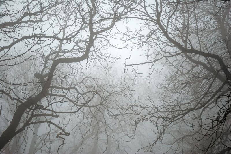 De naakte Takken van de Boom in de Mist royalty-vrije stock foto's