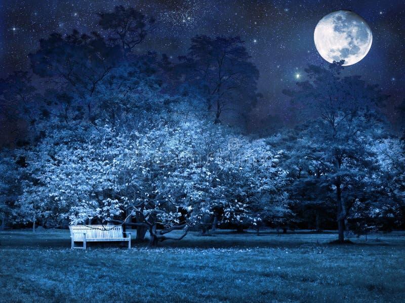 De nacht van de volle maan in park royalty-vrije stock foto's