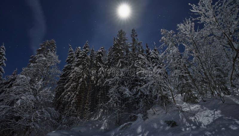 De nacht van de volle maanwinter fairytale, sneeuw behandelde bomen royalty-vrije stock foto