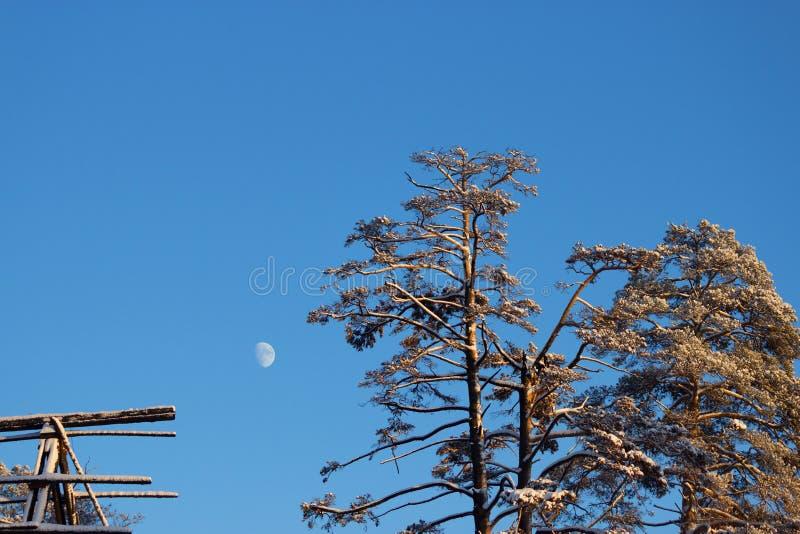 De nacht van de winter Bomen die door sneeuw worden behandeld royalty-vrije stock foto