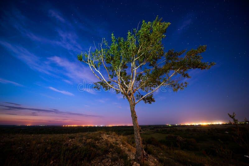 De nachthemel, een eenzame boom en een dalende ster royalty-vrije stock foto