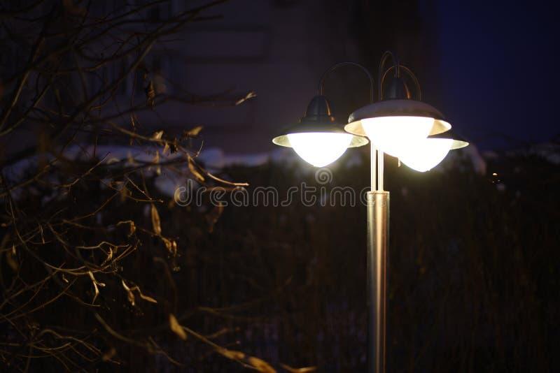 de nachtlantaarn door de wintertakken steekt de duisternis aan De ruimte van het exemplaar stock afbeeldingen