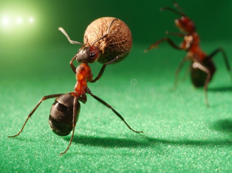 De nachtvoetbal van mieren bij stadion royalty-vrije stock afbeelding