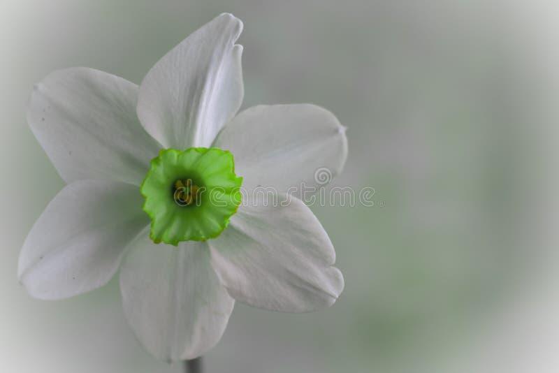 De narcissen bloeien achtergrond van de mooie en bloesem de violette daling royalty-vrije stock fotografie