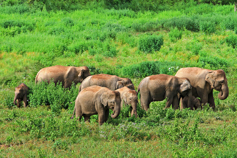 De Natiepark van Kuiburi, Prachuap Khiri Khan Province, Thailand royalty-vrije stock foto