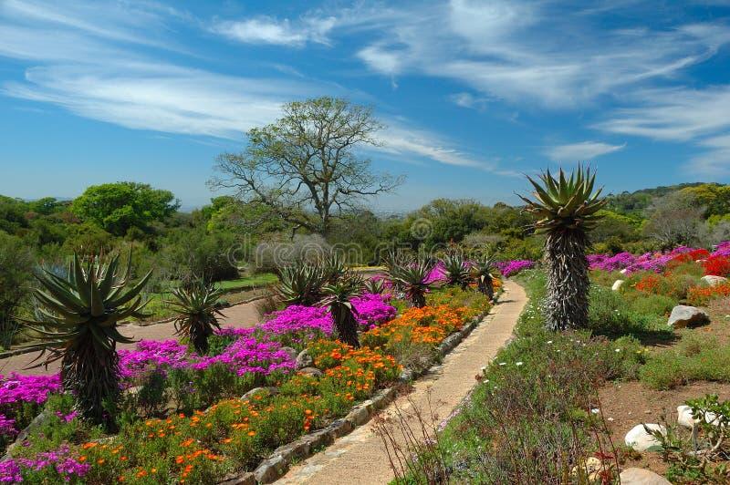 De Nationale Botanische Tuin van Kirstenbosch royalty-vrije stock foto's