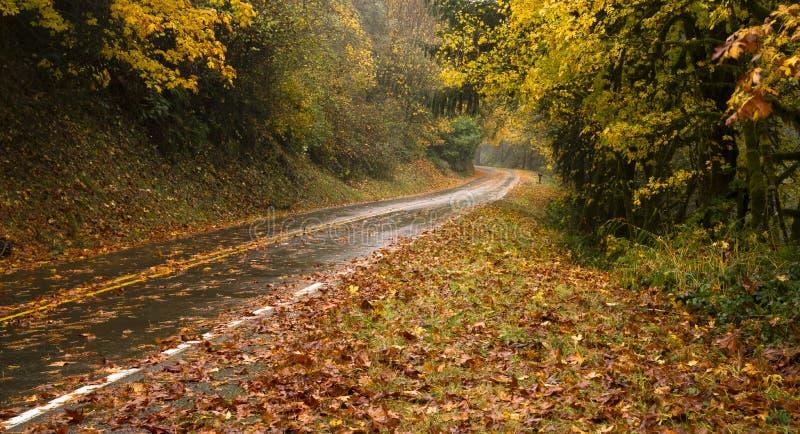 De natte Regenachtige Autumn Day Leaves Fall Two-Reis van de Steegweg stock afbeelding