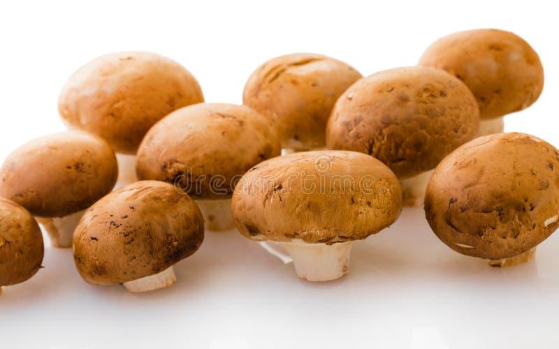 De naturliga rå champignonsna arkivbilder