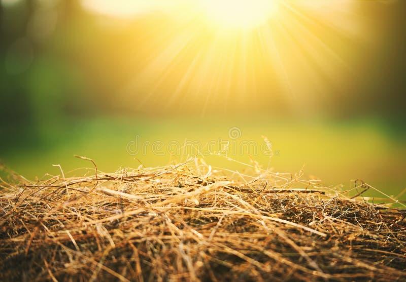 De natuurlijke achtergrond van de Zomer hooi en stro in zonlicht stock afbeelding