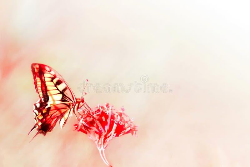 De natuurlijke achtergrond van de Zomer Rode gele vlinder op rode bloemen Natuurlijk de zomer artistiek beeld stock afbeelding