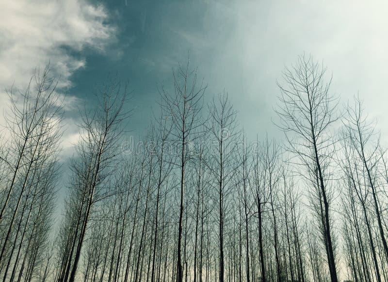 De natuurlijke fotografie van wolkenzwitserland stock afbeelding