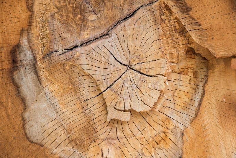 De natuurlijke houten textuur van het boompatroon stock fotografie