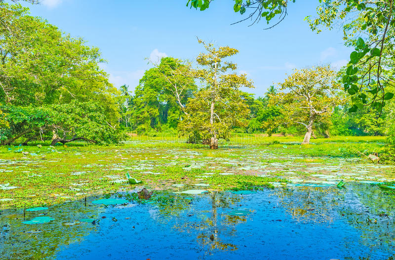 De natuurlijke oriëntatiepunten van Sri Lanka stock afbeeldingen