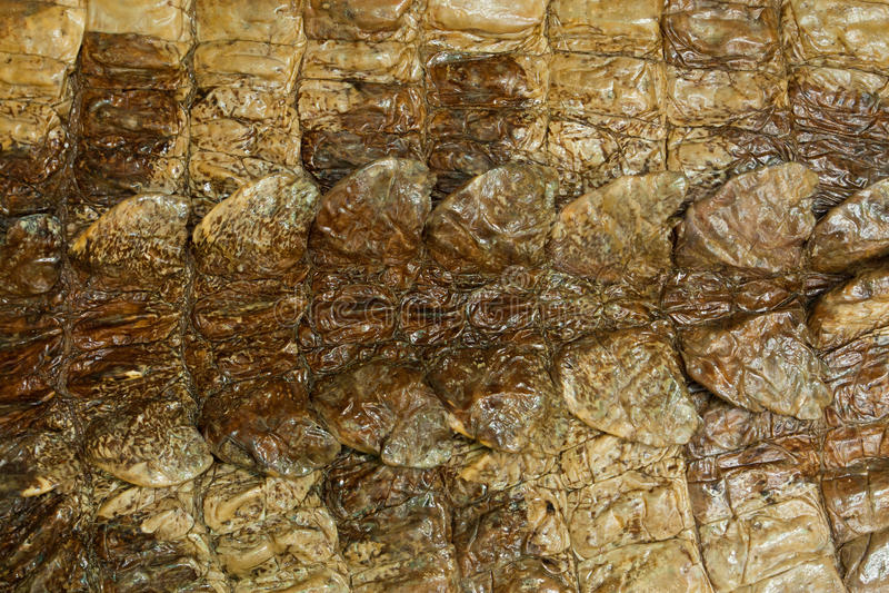 De natuurlijke textuur van de krokodilhuid stock foto's
