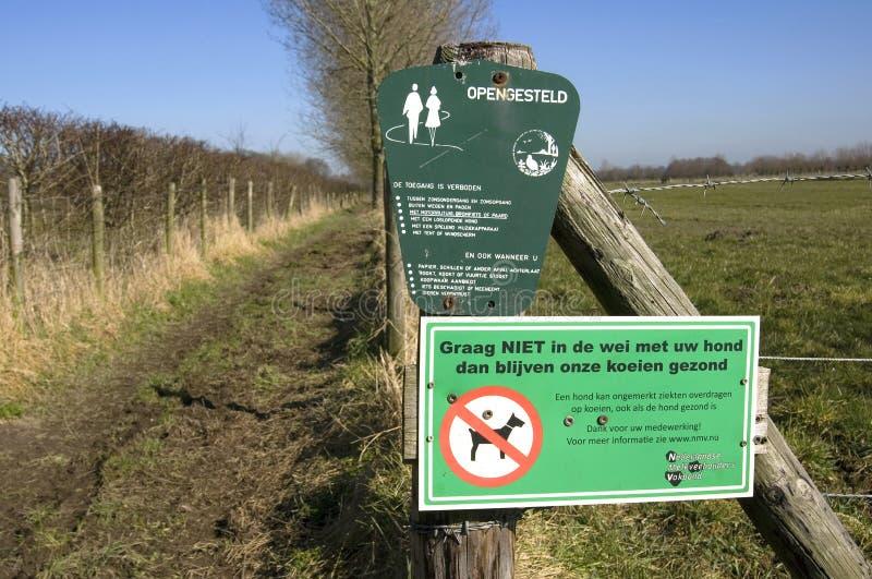 De Nederlandse besmetting van de landbouwersvrees van koeien door hondpoo stock afbeeldingen