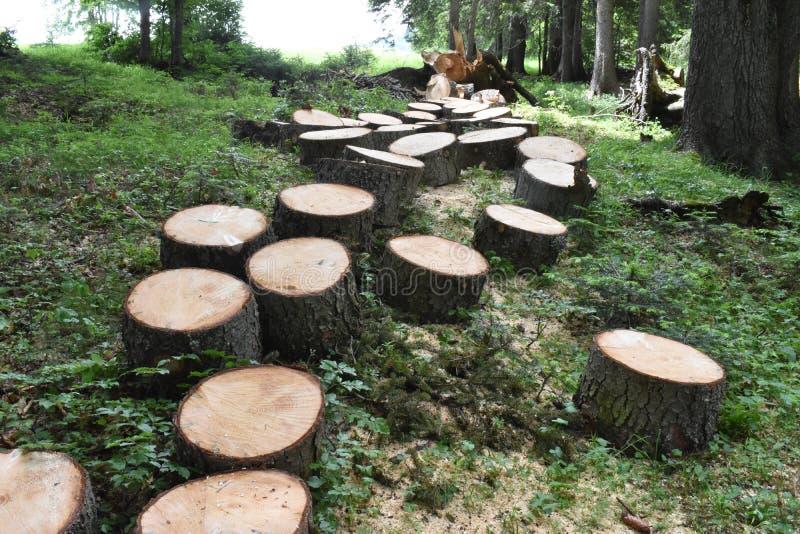 De nette boom die in de brokken wordt gesneden royalty-vrije stock afbeelding