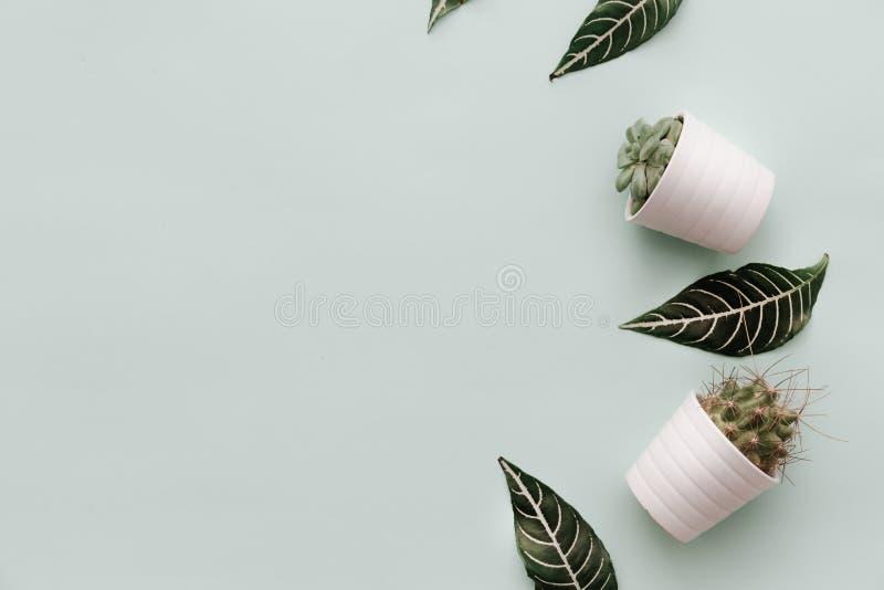 De neutrale Minimalistische Vlakte legt Scène met ingemaakte cactus en in groene bladeren royalty-vrije stock fotografie