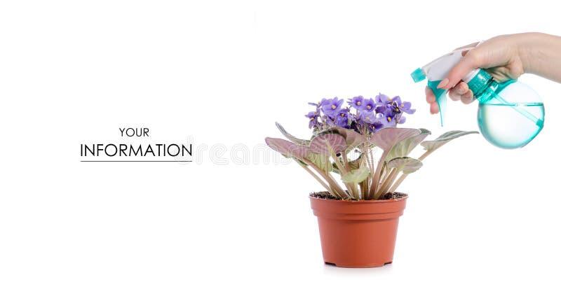 De nevel met waterpulverizer voor bloemen plant violet patroon stock afbeelding