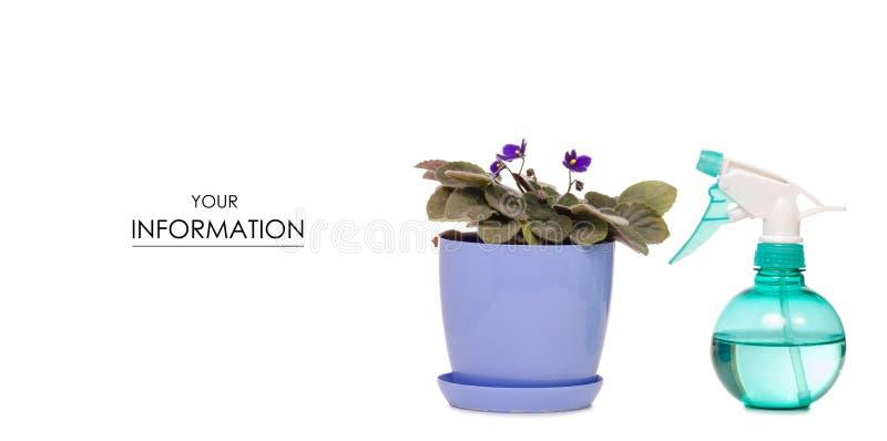 De nevel met waterpulverizer voor bloemen plant violet patroon stock foto