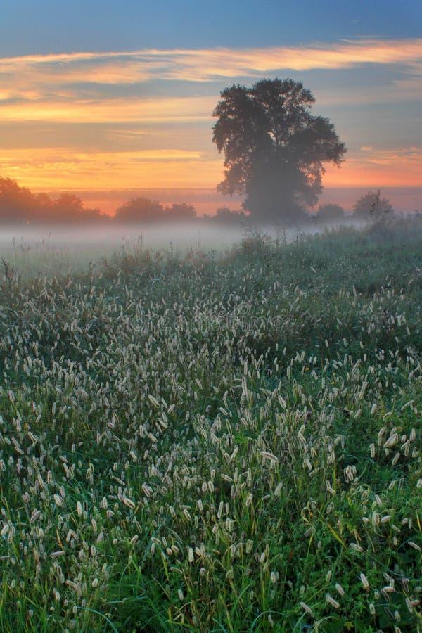 De nevelige ochtend van de dageraadherfst royalty-vrije stock afbeelding