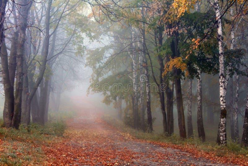 De nevelige ochtend van de steeg vroege herfst royalty-vrije stock afbeelding