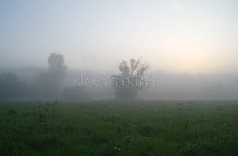 De nevelige weidelente bij zonsopgang stock fotografie