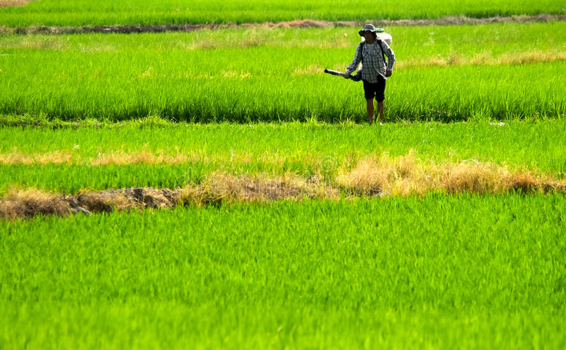 De nevelinsecticide van de landbouwer in het landbouwbedrijf royalty-vrije stock fotografie