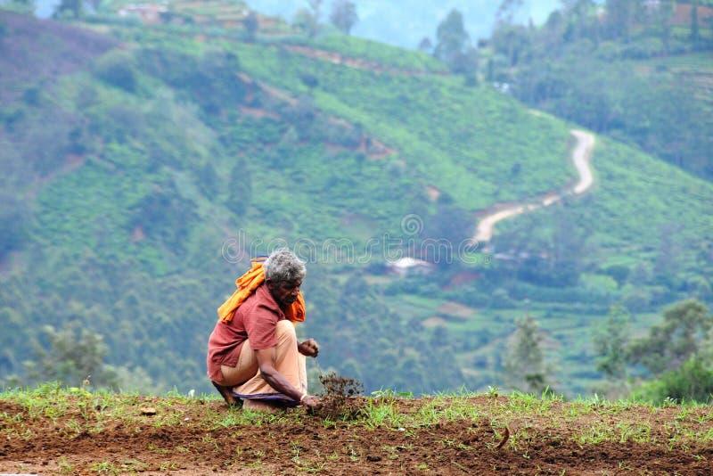 De niet geïdentificeerde landbouwer behandelt het landbouw planten op het omringende gebied van de stad van Nuwara Eliya royalty-vrije stock fotografie