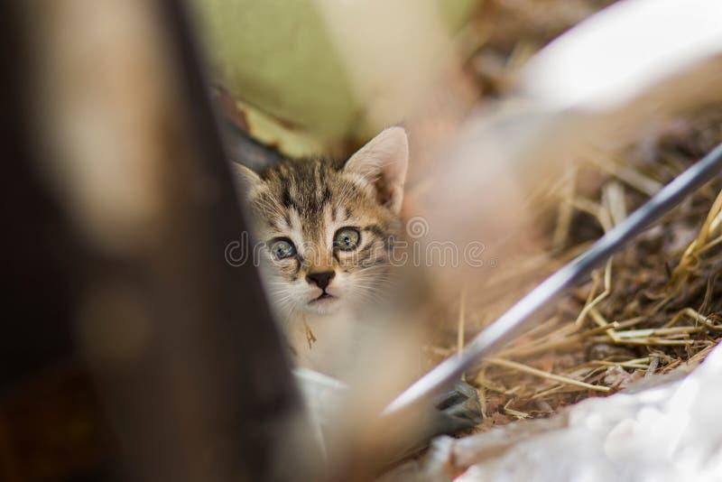 de nieuwe foto van 2018, aanbiddelijke verdwaalde babykat stock afbeelding