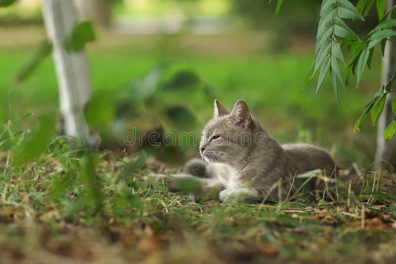 de nieuwe foto van 2018, slaperige aanbiddelijke grijze verdwaalde kat royalty-vrije stock foto