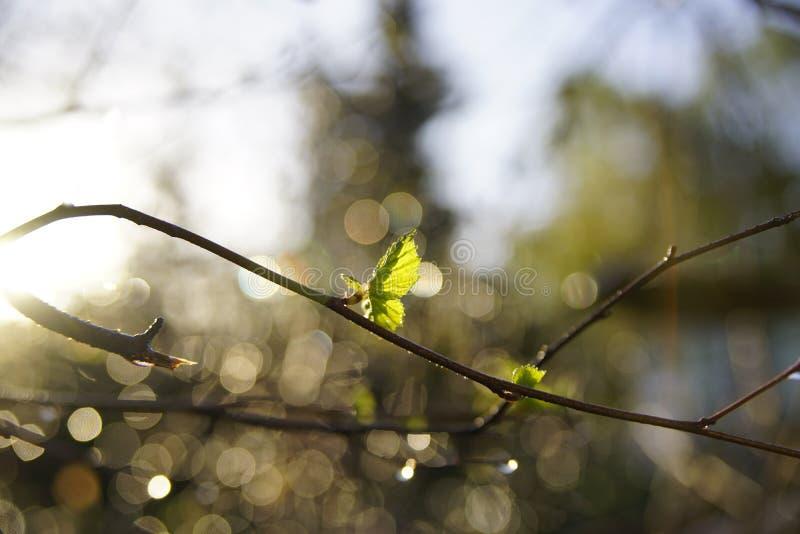 De nieuwe Groei brengt Nieuwe Hoop stock foto
