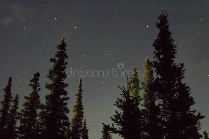 De noordelijke lichten arcoss blacked hemel van het leven Van Alaska omhoog starend bij de sterren Noordelijke lichten over de zw royalty-vrije stock afbeelding
