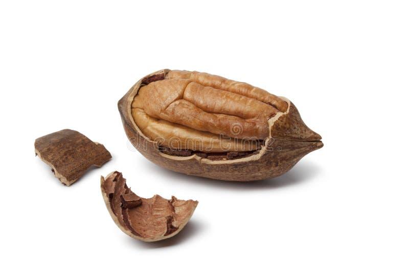 De noot van de pecannoot in gebroken shell stock foto's