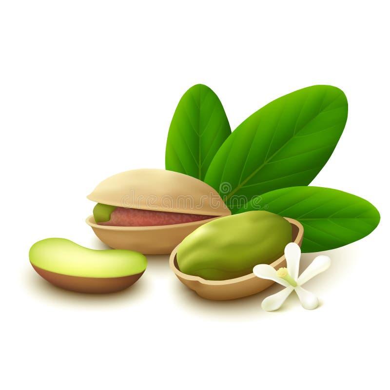 De noten van de pistache op witte achtergrond stock illustratie
