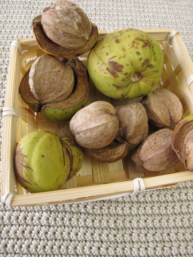 De noten van de Shellbarkhickory in mand stock afbeelding