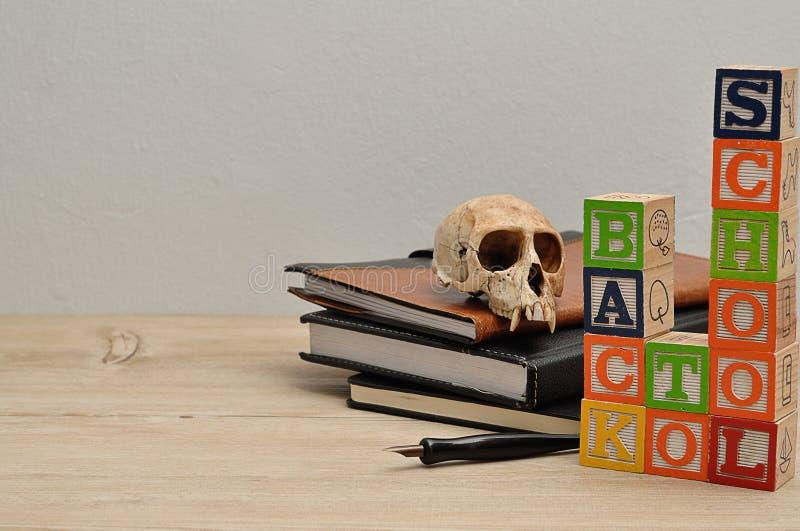 De nuevo a escuela con una pila de libros, de una pluma y de un cráneo del mono fotos de archivo