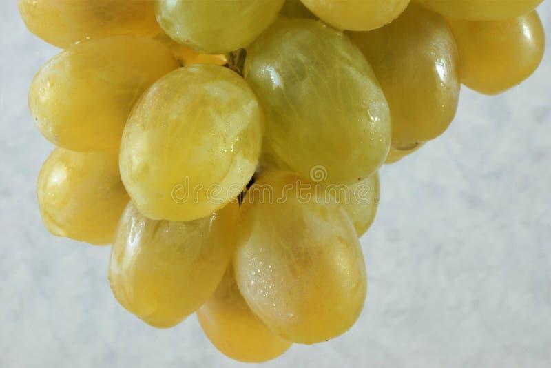 De nuttige druiven van de delicatessebes zijn gegeten vers stock foto's