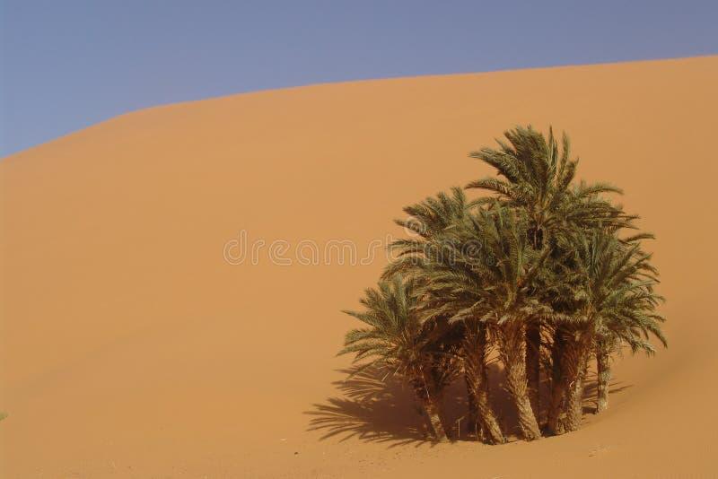 De Oase van de woestijn royalty-vrije stock afbeeldingen