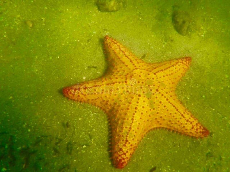 In de oceaan royalty-vrije stock fotografie