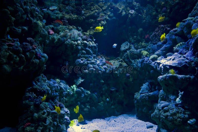 In de oceaan stock foto's