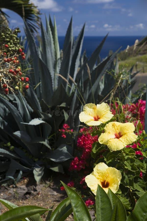 De Oceaan van Overlookin van de Tuin van de bloem stock foto