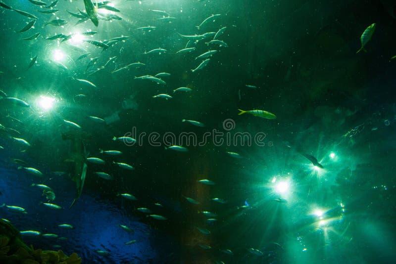 De oceaanparkoceaan is Aquarium van mensen benieuwd die op het mariene leven letten stock fotografie