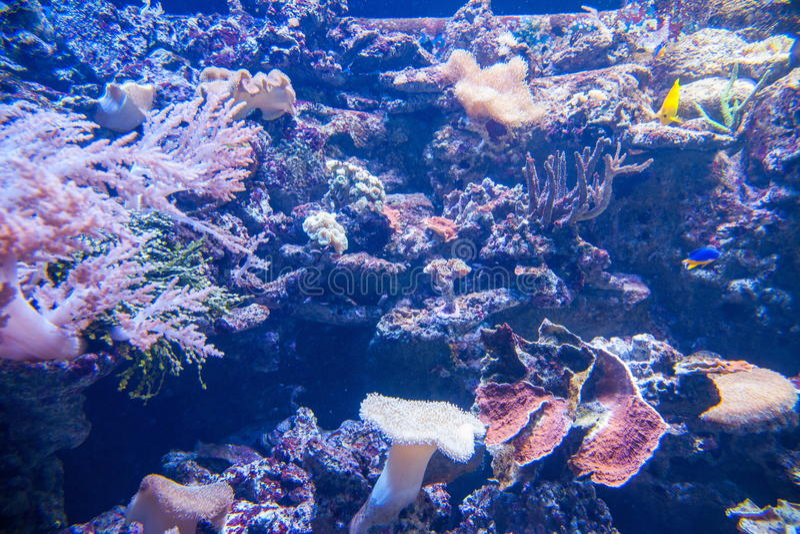 De oceaanparkoceaan is Aquarium van mensen benieuwd die op het mariene leven letten stock afbeeldingen