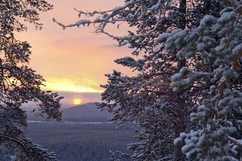 De ochtend/de pijnboom, het zonlicht en de sneeuw van de winter royalty-vrije stock afbeelding